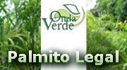 Onda Verde - Palmito Legal